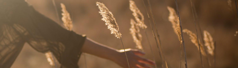 Hand gleitet durchs Kornfeld
